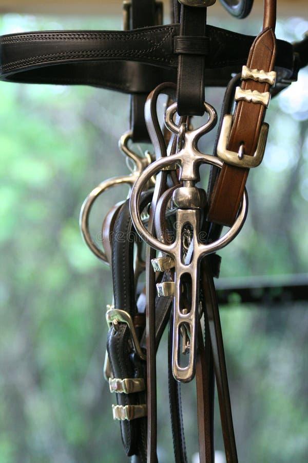 Cavalo que conduz o bit imagens de stock royalty free