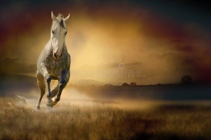 Cavalo que galopa através do vale do por do sol fotos de stock royalty free