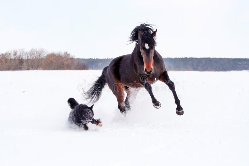 Cavalo que joga com um cão fotos de stock royalty free
