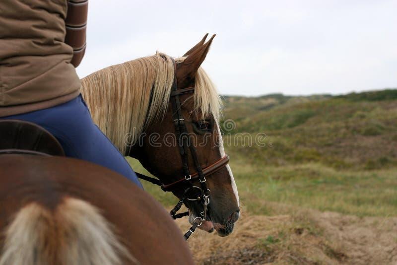 Cavalo que olha para trás imagens de stock royalty free