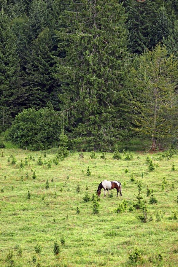Cavalo que pasta em uma montanha foto de stock royalty free