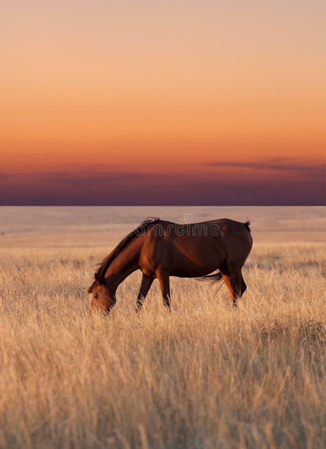 Cavalo que pasta no pasto fotos de stock