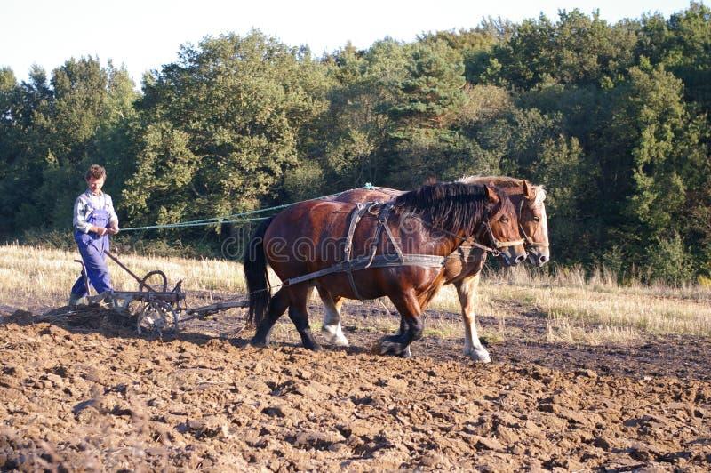 Cavalo que ploughing em Poland imagens de stock