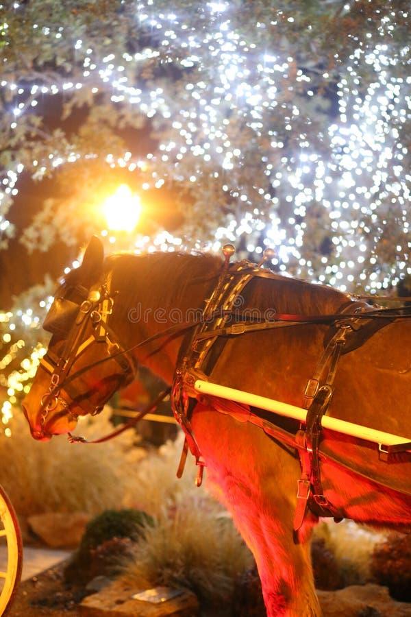 Cavalo que puxa um transporte foto de stock