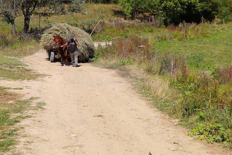 Cavalo que puxa um transporte de feno imagens de stock