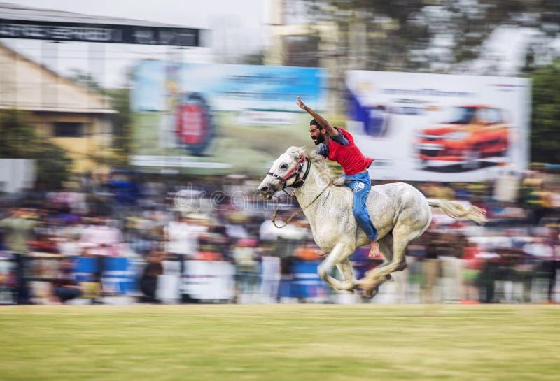 Cavalo Racing fotografia de stock royalty free