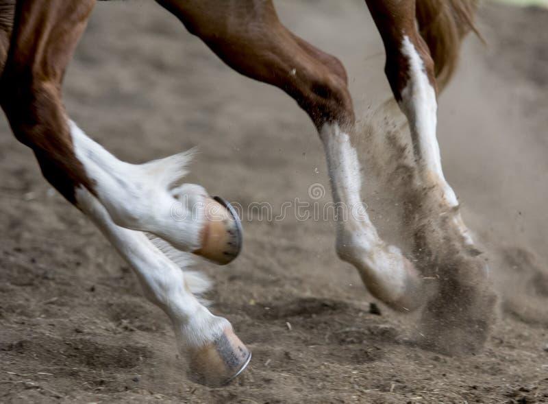 Cavalo running foto de stock
