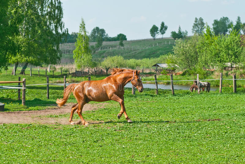 Cavalo running foto de stock royalty free