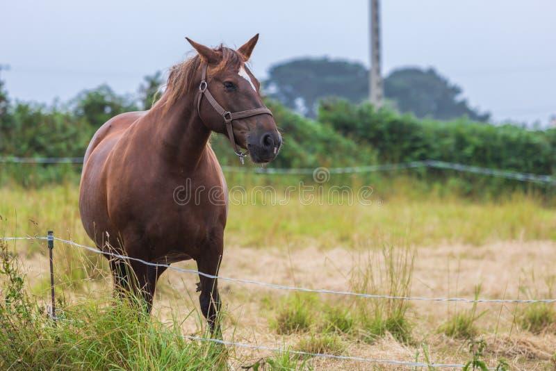 Cavalo só em um prado imagem de stock royalty free