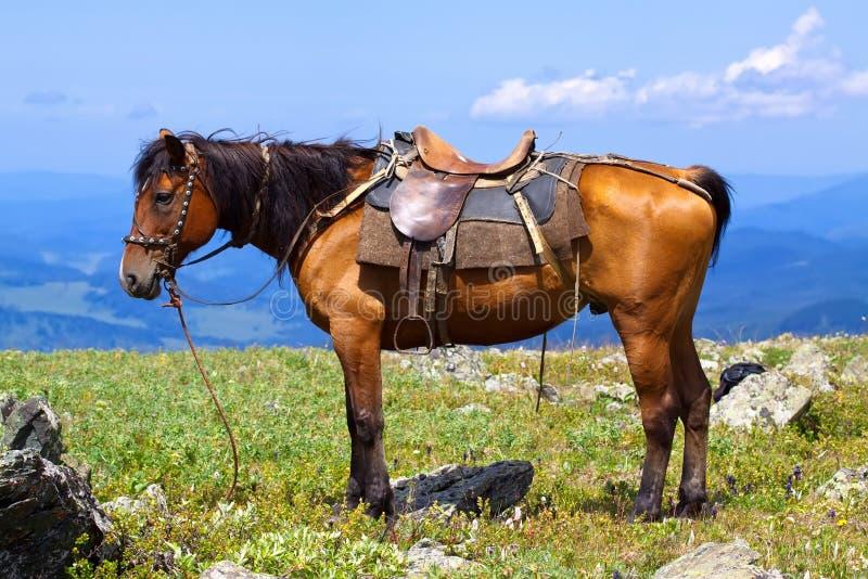 Cavalo selado fotos de stock