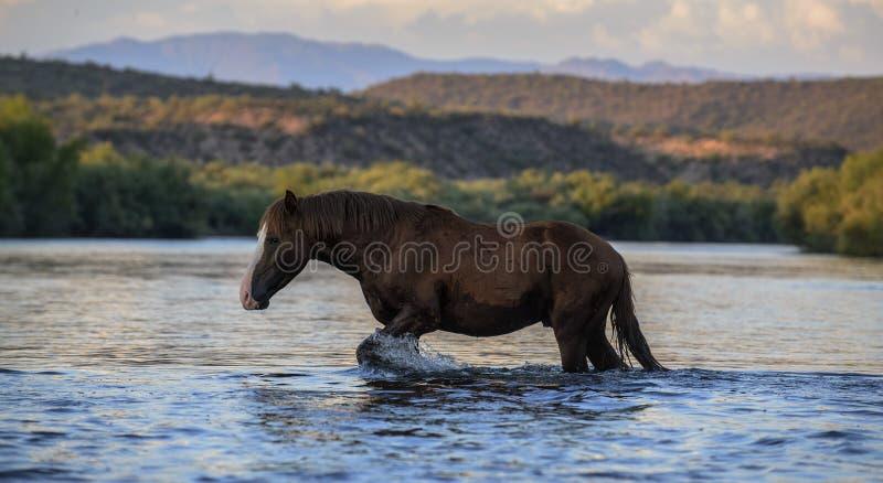 Cavalo selvagem imagem de stock royalty free