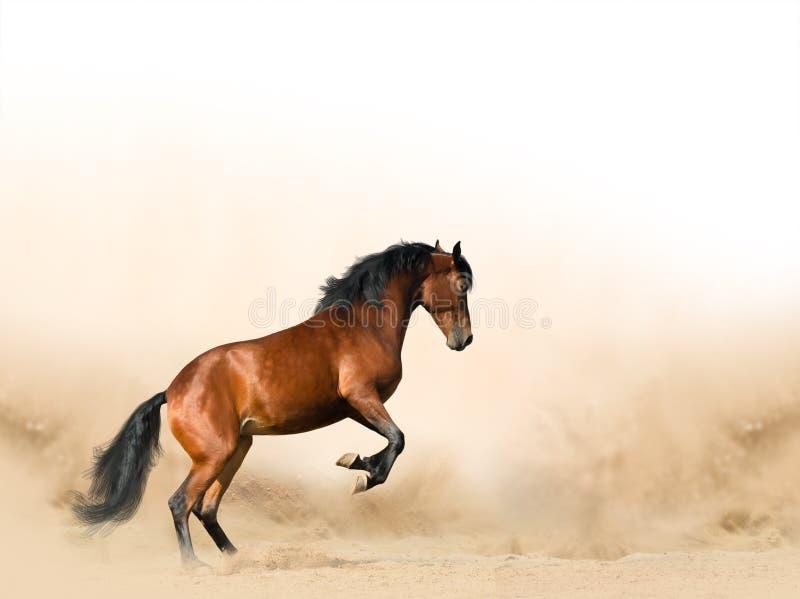 Cavalo selvagem nas pradarias imagem de stock