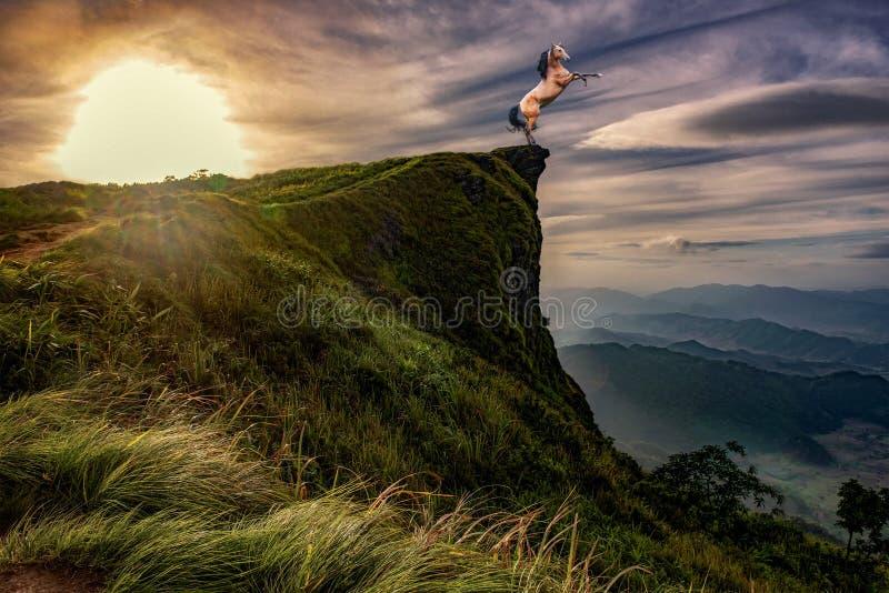 Cavalo selvagem que eleva, nascer do sol, por do sol fotografia de stock