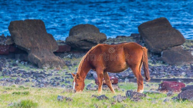 Cavalo selvagem que pasta perto de Moai caído na Ilha de Páscoa imagens de stock