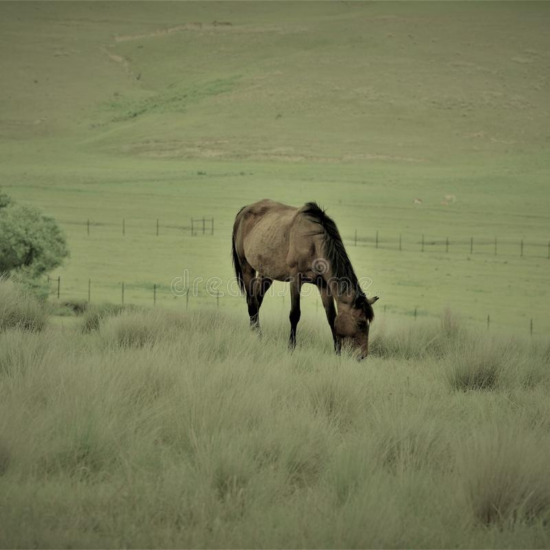 Cavalo solitário imagem de stock royalty free