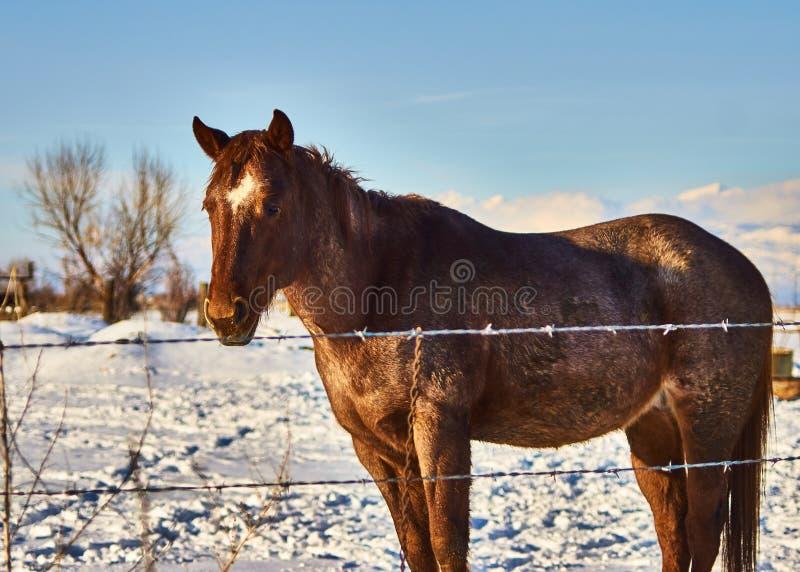 Cavalo solitário imagem de stock
