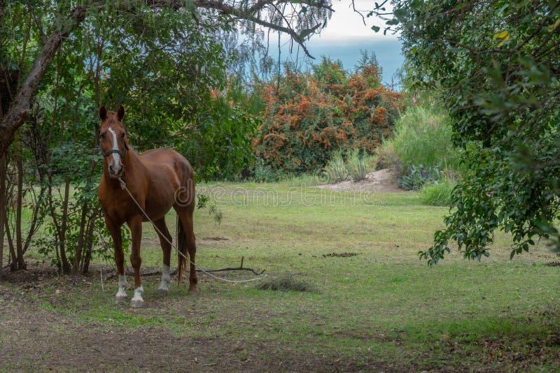 Cavalo solitário no campo fotografia de stock