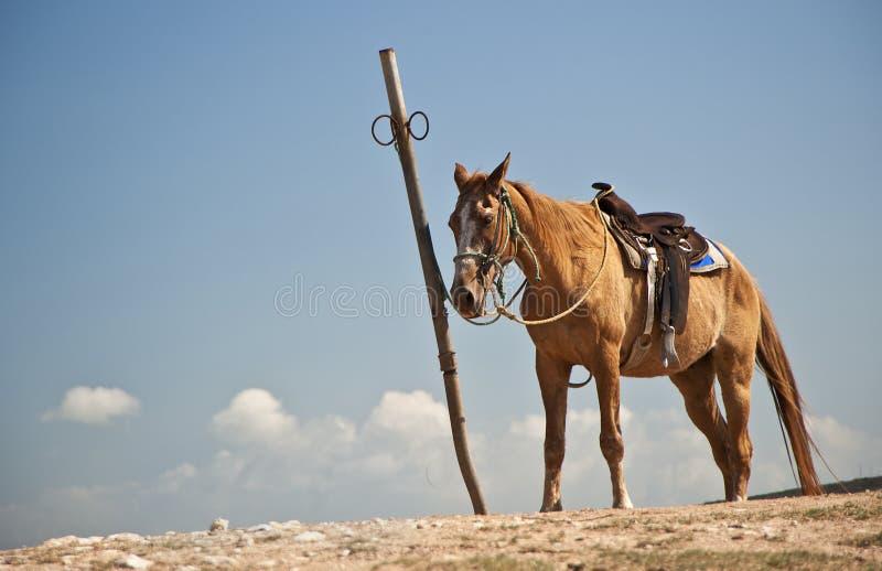 Cavalo solitário no monte fotos de stock
