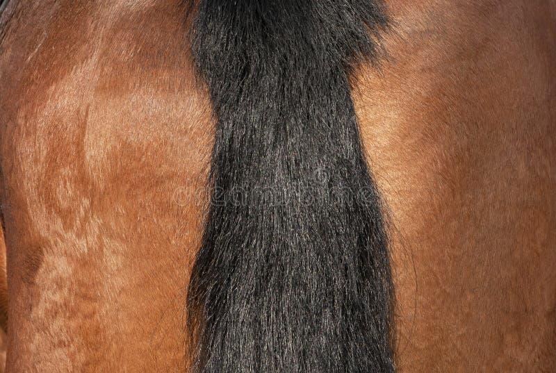 Cavalo: uma cauda da trança fotos de stock