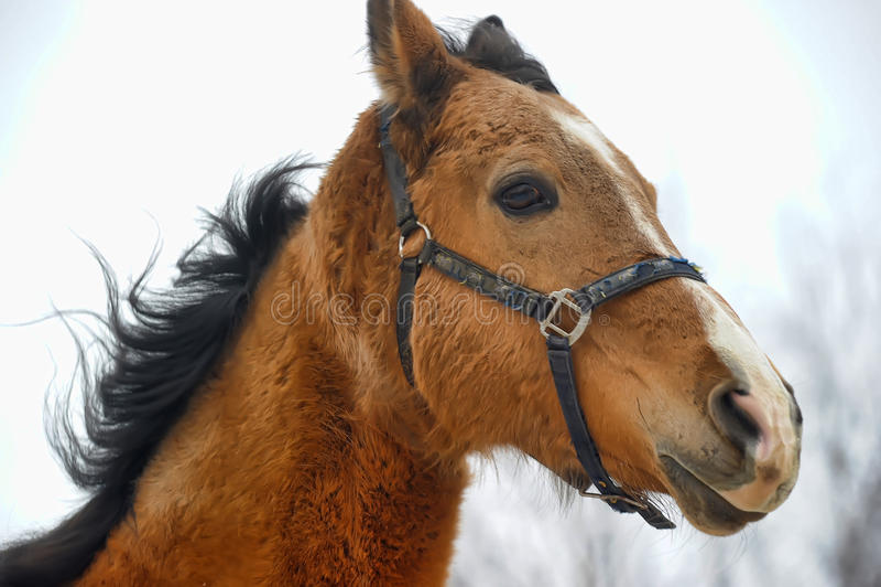 Cavalo vermelho bonito fotografia de stock royalty free
