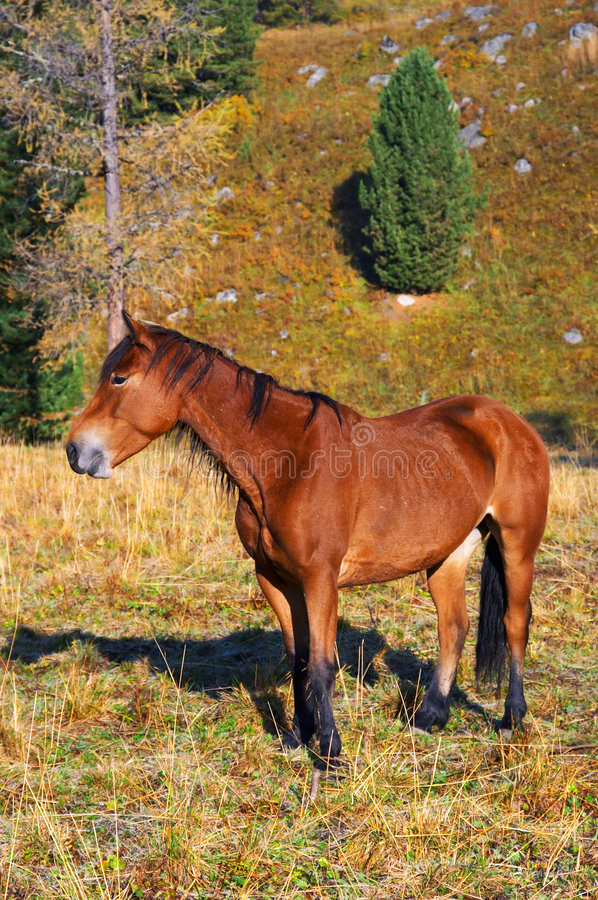 Cavalo vermelho bonito. foto de stock royalty free