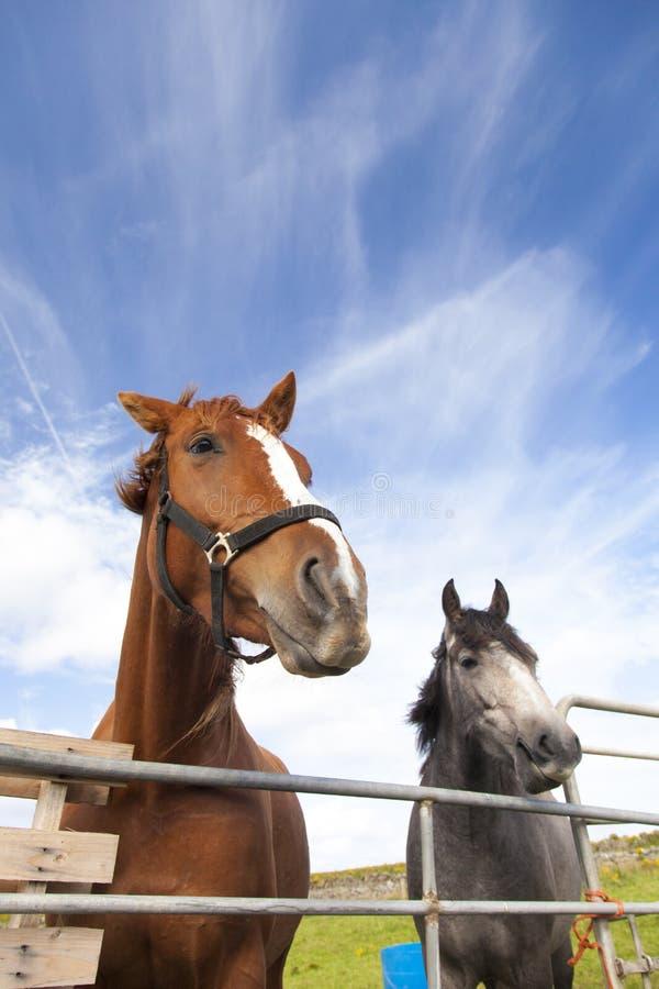 Cavalos atrás da cerca fotos de stock