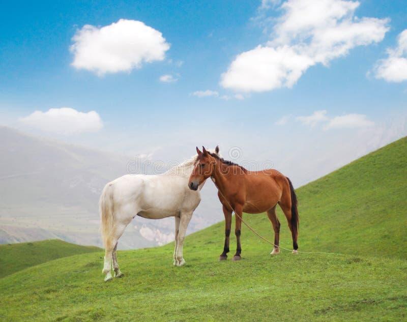 Cavalos Brancos E Marrons Imagem de Stock