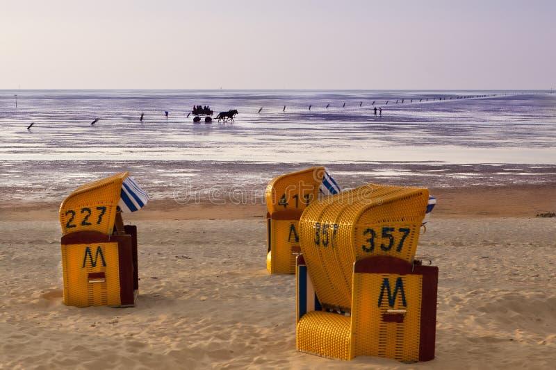Cavalos com as barracas no por do sol no mar imagens de stock royalty free