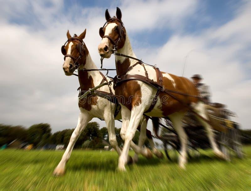 Cavalos com carro fotos de stock royalty free