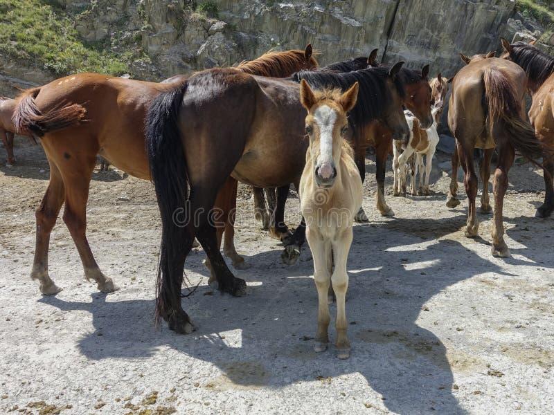 Cavalos com um potro que olha a câmera fotos de stock