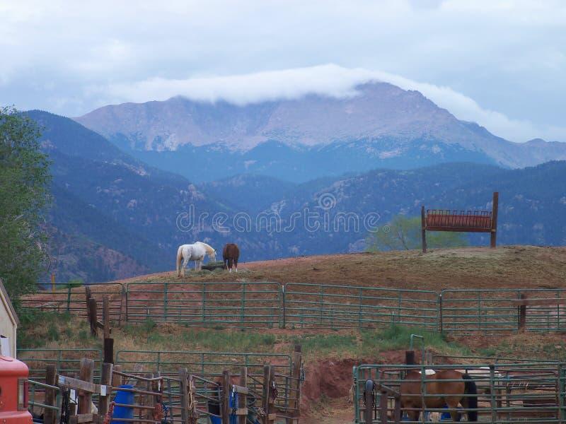 Cavalos com uma vista das Montanhas Rochosas fotos de stock