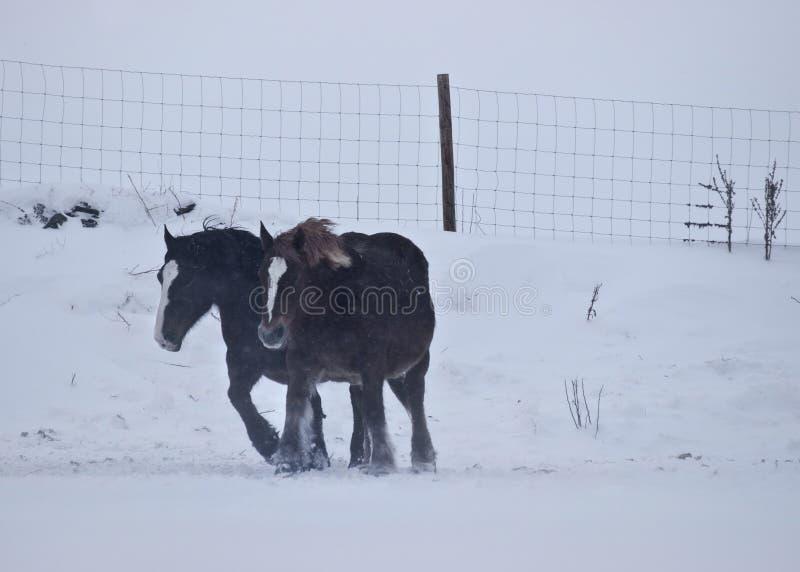 Cavalos contra o vento fotos de stock royalty free