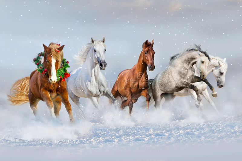 Cavalos corridos na neve Imagem do Natal fotos de stock