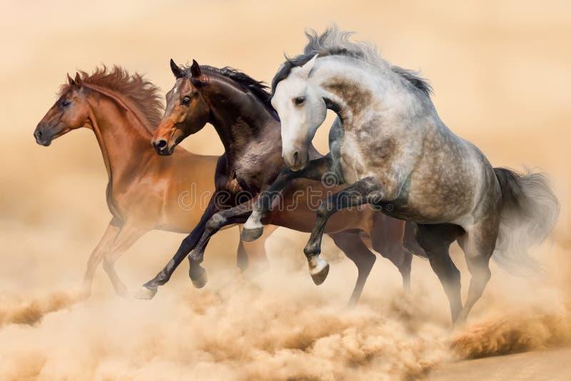 Cavalos corridos na poeira foto de stock