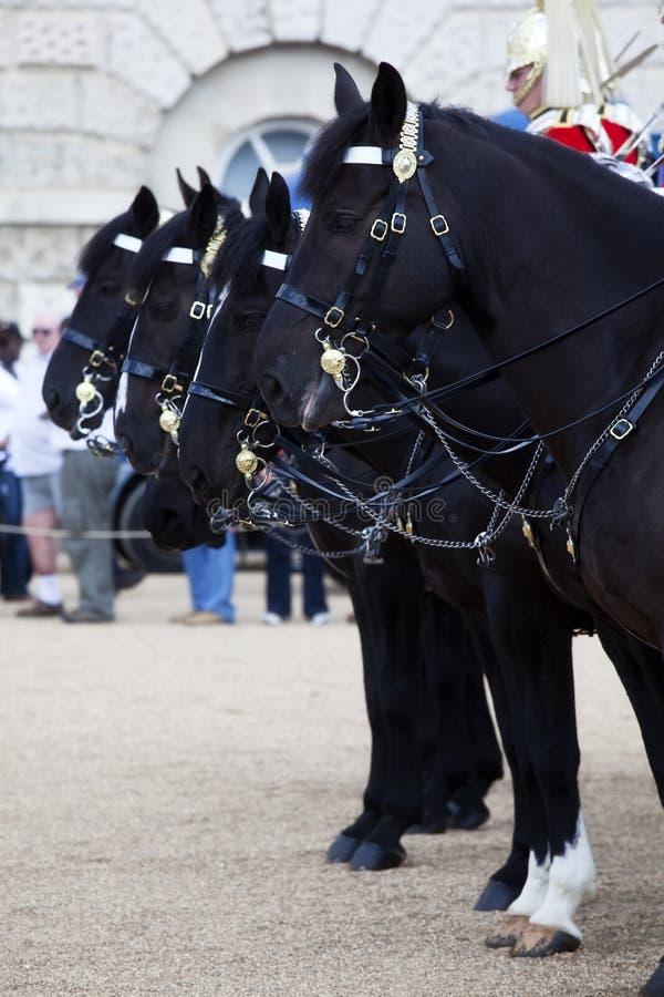 Cavalos da cavalaria britânica do agregado familiar foto de stock royalty free