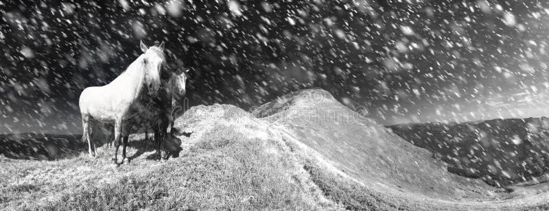 Cavalos da neve na tempestade foto de stock