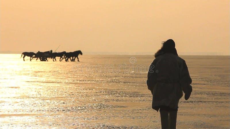 Cavalos da silhueta na praia durante o por do sol fotos de stock royalty free