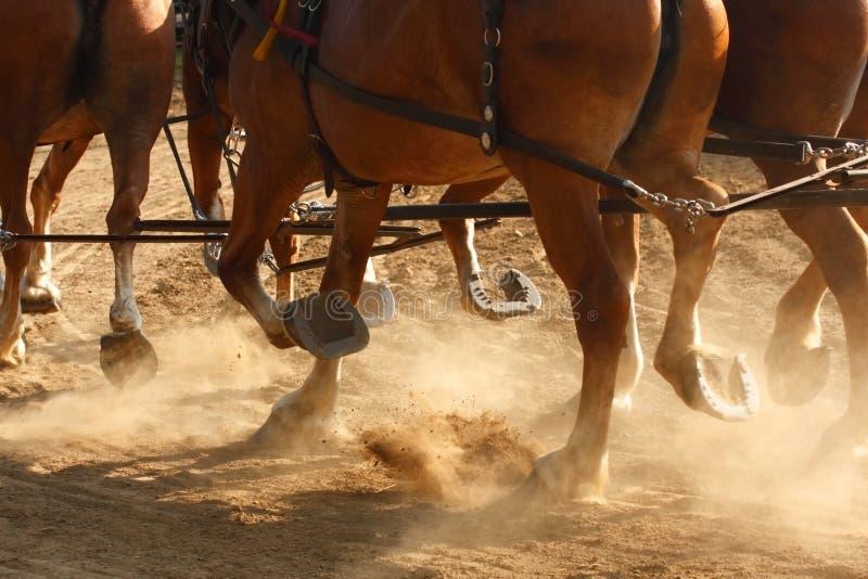 Cavalos de trabalho imagem de stock