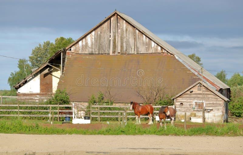Cavalos do trabalho e celeiro velho foto de stock royalty free