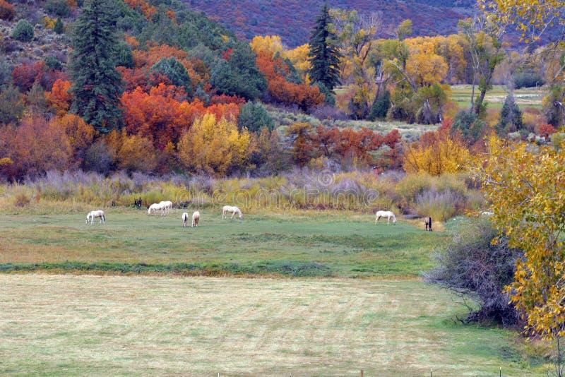 Cavalos e árvores imagens de stock
