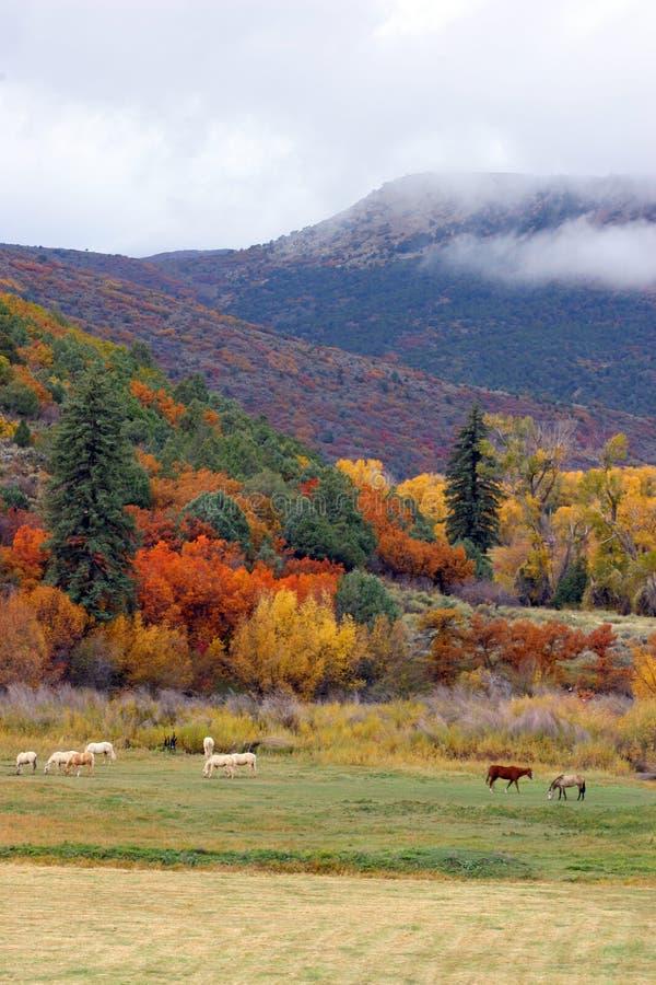 Cavalos e árvores foto de stock royalty free