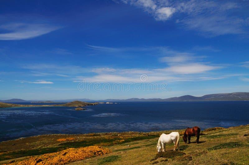 Cavalos e céus azuis fotografia de stock