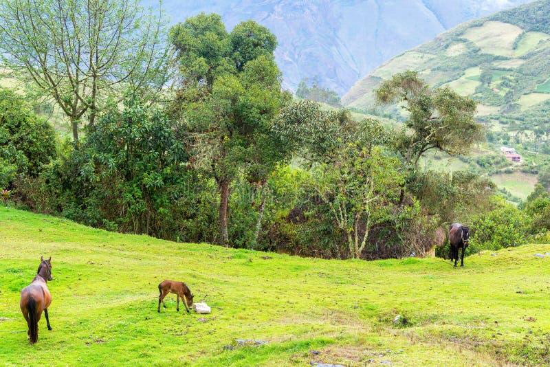 Cavalos e paisagem verde luxúria imagem de stock