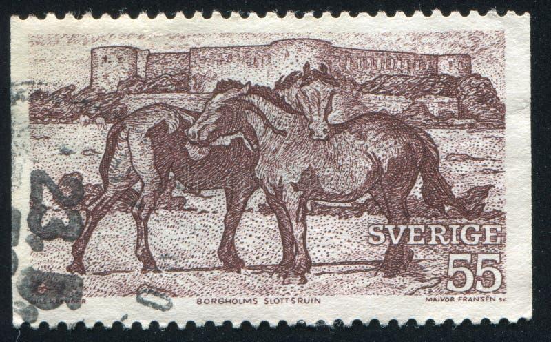 Cavalos e ruína do castelo de Borgholm fotos de stock royalty free