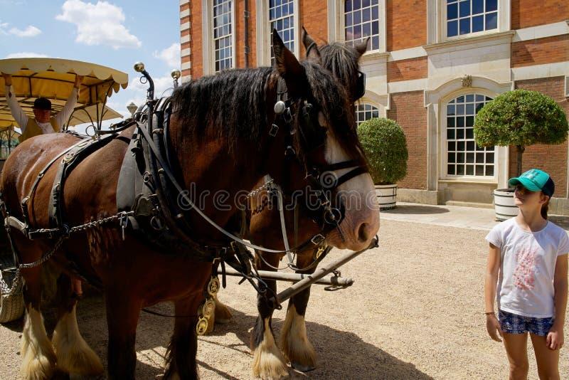 Cavalos e transporte estacionados acima em Hampton Court Palace fotos de stock