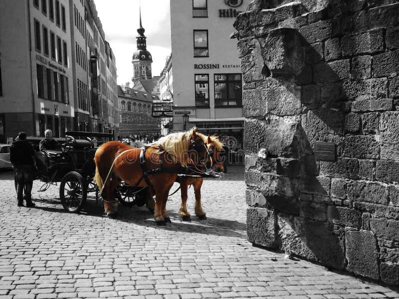 Cavalos em Dresden fotos de stock royalty free