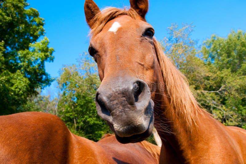 Cavalos em uma cerca imagens de stock royalty free
