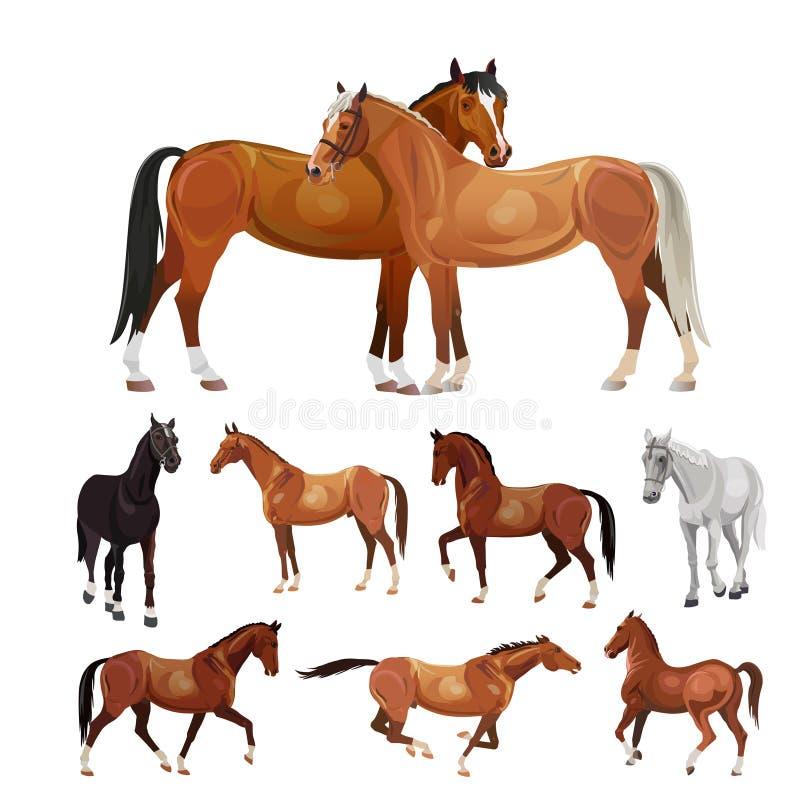Cavalos em várias poses ilustração do vetor