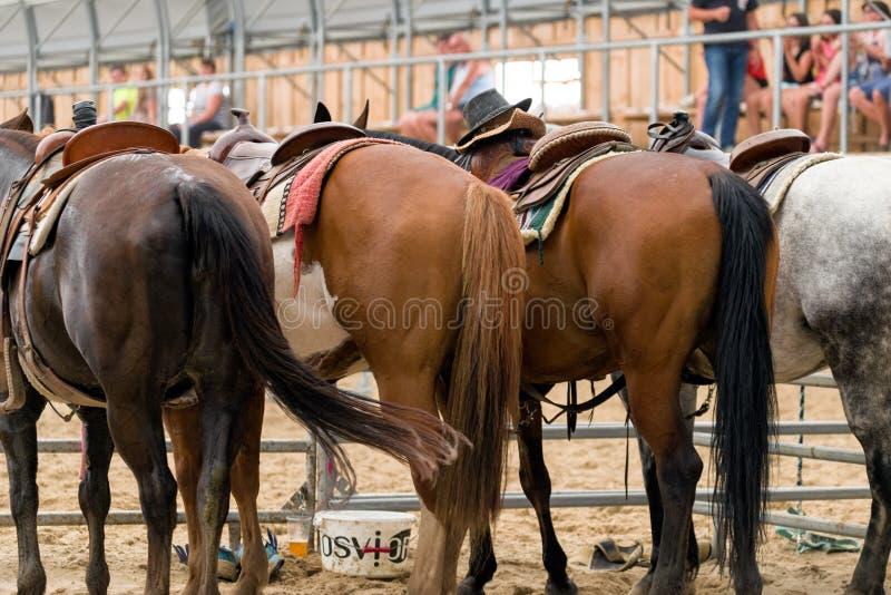 Cavalos na arena na mostra do rodeio imagem de stock