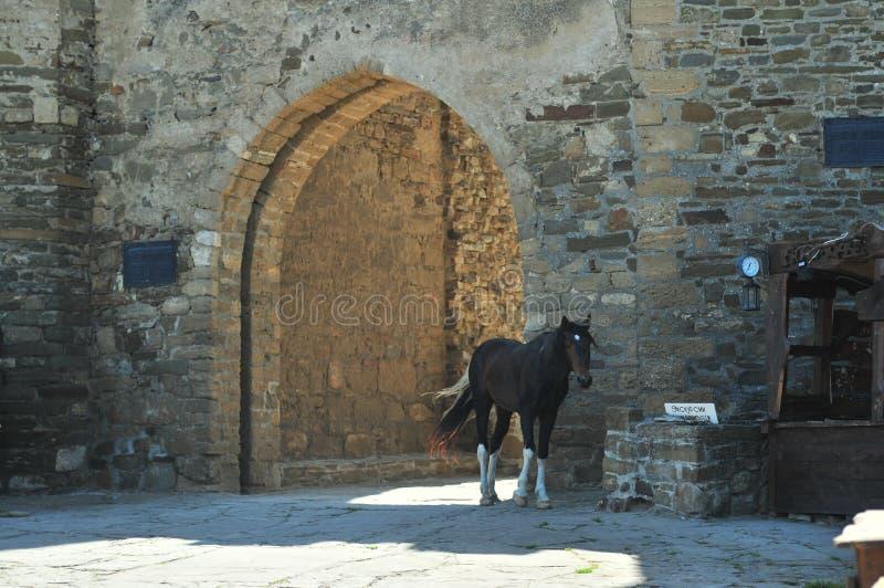 Cavalos na fortaleza Genoese, Sudak, Ucrânia, Crimeia fotografia de stock